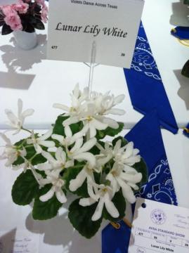 lunar-lily-white